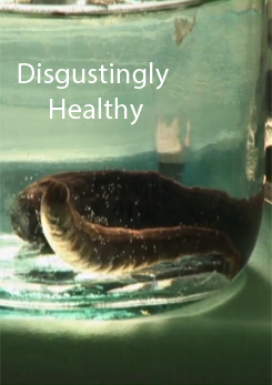 Watch Full Movie - Disgustingly Healthy, Maggots