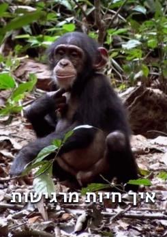 Watch Full Movie -  מה מרגישות חיות - שאלו או רכשו סרט