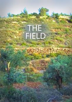 Watch Full Movie - The Field