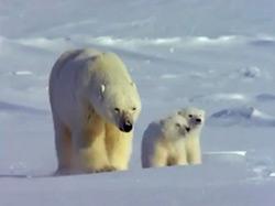 משפחת החיות שלי - קרח