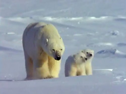 Watch Full Movie - משפחת החיות שלי - ג'ירף