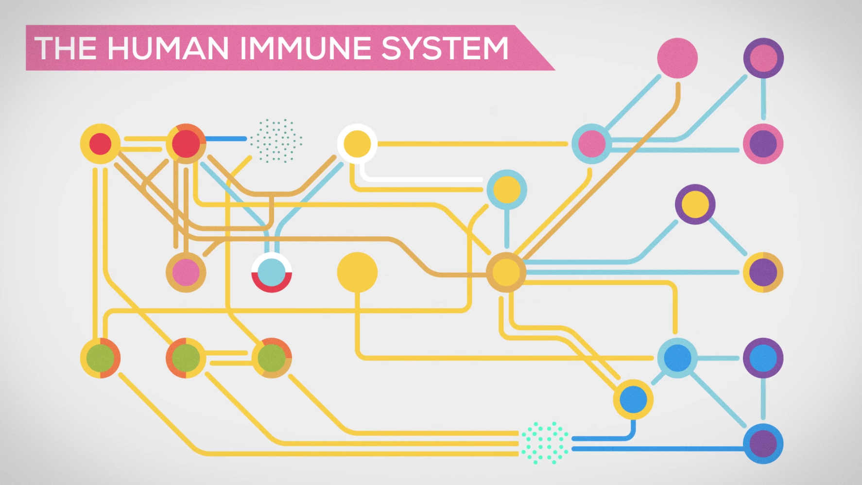 Watch Full Movie - The Immune System Explained: Bacteria Infection