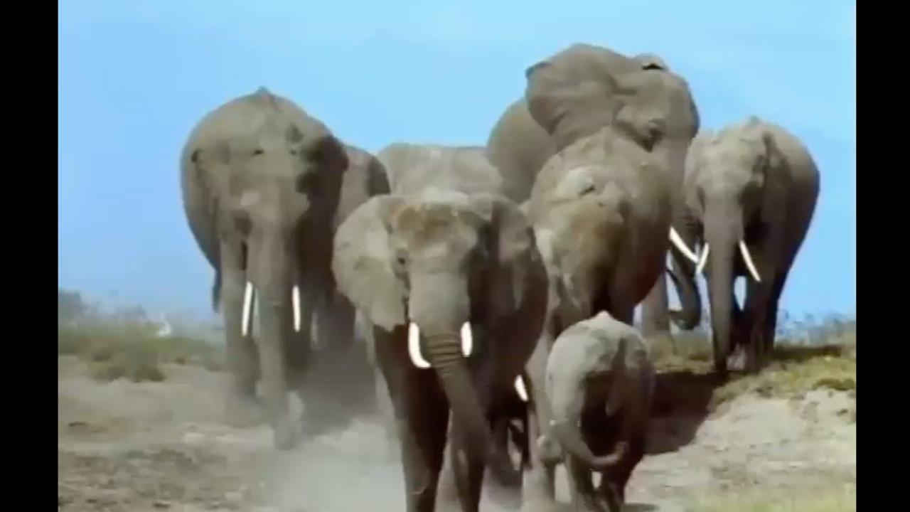 Watch Full Movie - משפחת החיות שלי - פנדה - לצפיה בטריילר